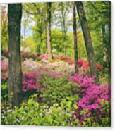 The Azalea Woodland Canvas Print