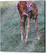 The Bambi Stance Canvas Print