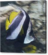 The Bannerfish Canvas Print