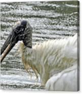 The Bathing Wood Stork 2 Canvas Print