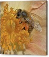 The Beautiful Bee Canvas Print