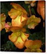 The Beautiful Begonia Canvas Print