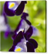 What's Wrong With Being A Pansy? Canvas Print