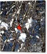 The Beauty Of A Cardinal Canvas Print