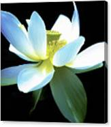 The Beauty Of A Lotus Canvas Print