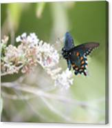 The Beauty Of Butterflies  Canvas Print