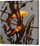 The Beauty Of Goldfish Canvas Print