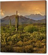 The Beauty Of The Sonoran Desert  Canvas Print