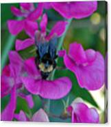 The Bee And The Flowers Canvas Print