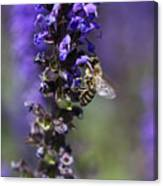 The Bee Hover Canvas Print
