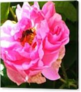 The Bee In The Rose Canvas Print