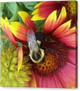 The Bee Keeper Canvas Print