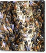 The Bees Hive It Canvas Print