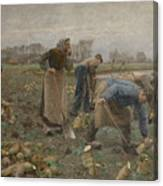 The Beet Harvest Canvas Print