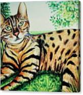 The Bengal Canvas Print