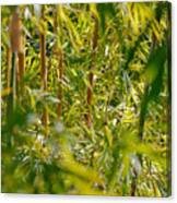 The Big Bamboo Canvas Print