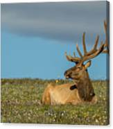 The Big Guy Resting Canvas Print