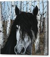 The Birch Horse Canvas Print