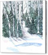 The Birch Trees Canvas Print