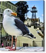 The Bird Of Alcatraz Canvas Print