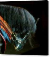The Black Horse I Canvas Print