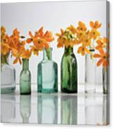 the Blooming yellow Ornithogalum Dubium in a transparent bottle instead vase Canvas Print