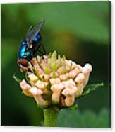 The Blue Bug Canvas Print
