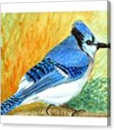 The Blue Jay Canvas Print