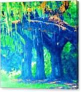 The Blue Live Oaks Canvas Print