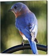 The Bluebird Canvas Print