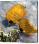 The Bluecheeked Butterflyfish Canvas Print