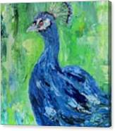 The Blues,peacock  Canvas Print