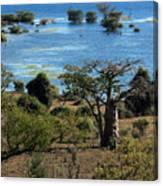The Boabob Tree Canvas Print