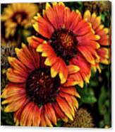 The Bold And Beautiful Pair Canvas Print