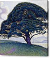 The Bonaventure Pine  Canvas Print
