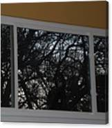 The Branch Window Canvas Print