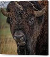 The Buffalo 2 Canvas Print
