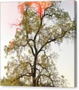 The Burning Tree Canvas Print