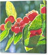 The Bush With The Red Berries Canvas Print