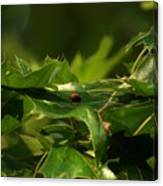 The Busy Lady Bugs Canvas Print