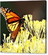 The Butterfly 2 Canvas Print