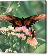 The Butterfly And The Bumblebee Canvas Print