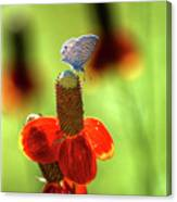 The Butterfly And The Coneflower Canvas Print