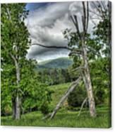 The Buzzard Trees Canvas Print