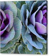 The Cabbage Patch Canvas Print