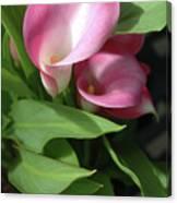 The Calla Lily Canvas Print