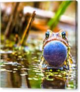 The Calling Frog Canvas Print