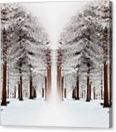 The Calm Of Winter In The Woods Canvas Print