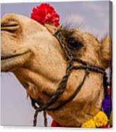 The Camel Beauty Canvas Print