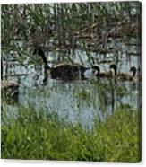 The Canadian Geese Family Canvas Print
